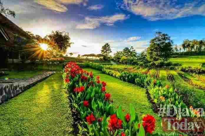 Wisata Kebun Mawar Situhapa Garut