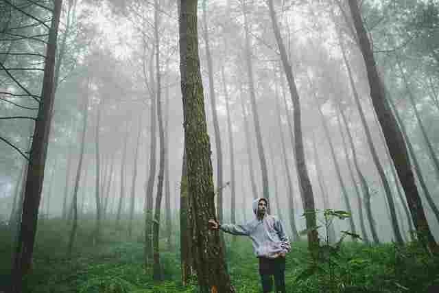 hutan pinus jahim